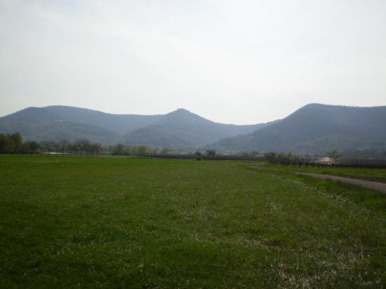 Altitona (Massif du Mont-Sainte-Odile, Alsace)
