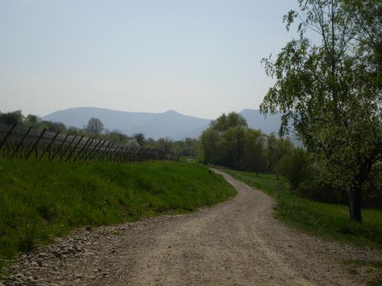 Altitona (Massif du Mont-Sainte-Odile, Alsace) - Vue depuis la sortie de Rosheim.
