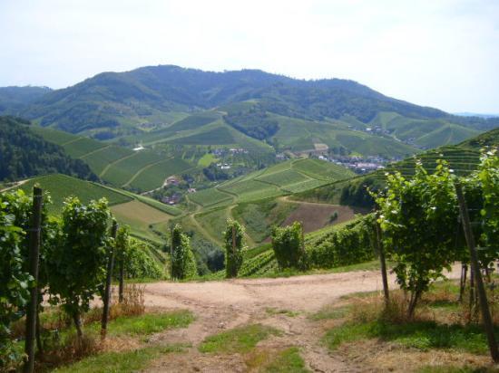 Près du Staufenburg en Forêt-Noire.
