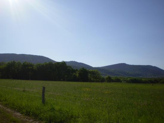 Altitona (Massif du Mont-Sainte-Odile, Alsace) - Vue depuis Heiligenstein.