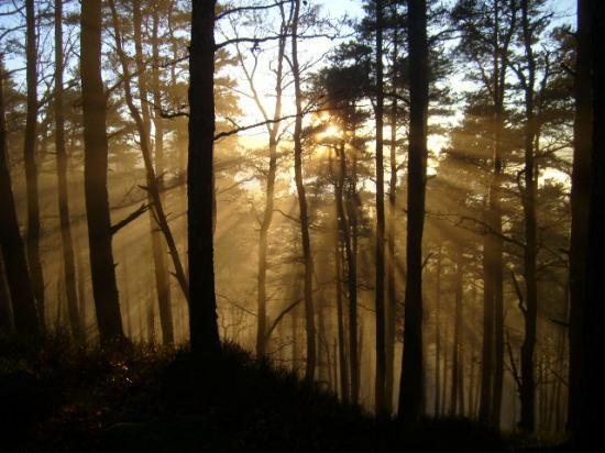 Altitona (Massif du Mont-Sainte-Odile, Alsace) - Le sous-bois d'automne.